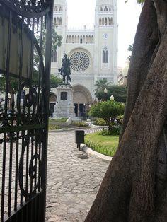 Guayaquil, Ecuador ,Parque seminario,conocido como parque de las iguanas.atras la catedral