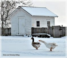 Midwestern Prairie Life - Town & Country Living