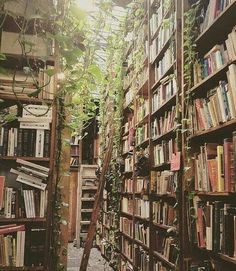 Incredible home library catalog system you'll loveYou can find Dream library and more on our website.Incredible home library catalog system you'll love Deco Nature, Dream Library, Beautiful Library, Home Libraries, Library Home, Attic Library, Library Art, Book Aesthetic, Travel Aesthetic