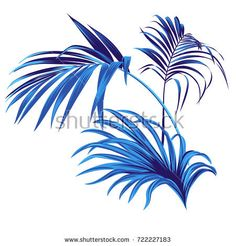 Set of vector tropical leaves. vector palm elements for graphic design. Beautiful botanical illustrations of elegant palm branches. Botanical Illustration, Illustration Art, Art Illustrations, Tropical Leaves, Tropical Flowers, Branch Art, Plant Art, Plant Leaves, Backdrops