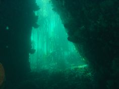 Kelp Kills Carbon: How Water-Based Plants Could Reverse Ocean Acidification