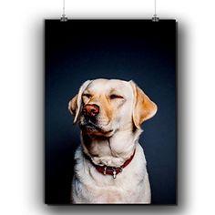 Deep Chill Doggy Dog Relax Pal Matte/Glossy Poster A3 (42cm x 30cm)   Wellcoda Wellcoda http://www.amazon.co.uk/dp/B01DWLVCYQ/ref=cm_sw_r_pi_dp_Qzkfxb1JPKTYY