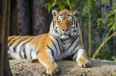 Tiger | Mathias Appel | Flickr