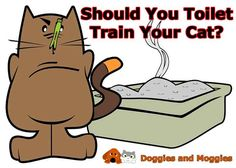 Toilet training your cat is not hard to do, if fact it's pretty easy, but is it a good idea? Read more at: http://doggiesandmoggies.net/toilet-train-cat/