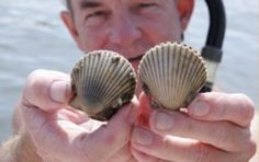 Go Scalloping at the Plantation on Crystal River  Photo courtesy of visitcitrus.com