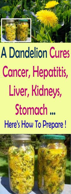 A Dandelion Cures Cancer, Hepatitis, Liver, Kidneys, Stomach … Here's How To Prepare ! #health #beauty #cancer #policy #insurance #healthy