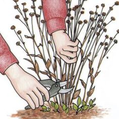 Advice on winter cleanup, spring pruning, sowing seeds, planting late-season bulbs, creating containers, dividing perennials, planting trees, and planning a vegetable garden.