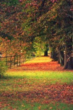 Romantic Autumn