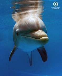 A Winter Dolphin selfie can always brighten someone's day!