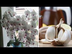 Usturoi pentru orhidee? într-o lună, vei avea o mulțime de flori frumoase - YouTube Indoor Plants, Candle Holders, Candles, Table Decorations, Home Decor, Makeup Ideas, Gardening, Youtube, Plant