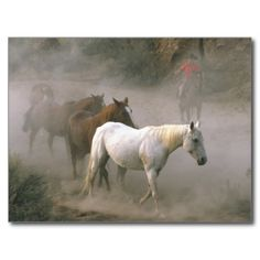 >>>Order          	Cowboy Herding Post Cards           	Cowboy Herding Post Cards today price drop and special promotion. Get The best buyDiscount Deals          	Cowboy Herding Post Cards Review on the This website by click the button below...Cleck Hot Deals >>> http://www.zazzle.com/cowboy_herding_post_cards-239889232222013725?rf=238627982471231924&zbar=1&tc=terrest