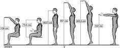 V tomto bode by mohli byť užitočné tzv. dosahy, teda do akej vzdialenosti človek dočiahne z určitej polohy. To má praktický význam napríklad pri plánovaní akýchkoľvek úložných priestorov
