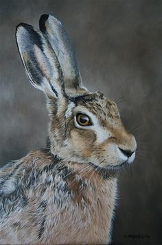Brown Hare study by ~clive64 on deviantART