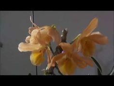 Plantando orquidea no carvão - YouTube