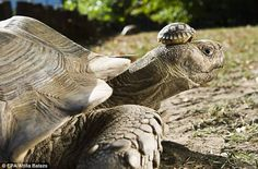 140 year old mom, with 5 day old son - Nyiregyhaza Animal Park in Hungary