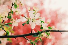Flower, Close-range Photogrammetry, Spring