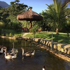 Duck Pond, Pig Farming, Beach Villa, French Chateau, Farm Gardens, Water Garden, Gazebo, Outdoor Living, Farmhouse