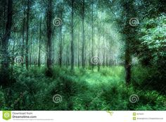 Semi-abstract: Mystical Woods - Download From Over 46 Million High Quality Stock…