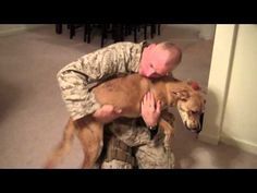 Marine greets his dog after a seven month deployment :)
