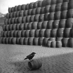 This photo from 1934 shows Joey the raven, the mascot of a London brewery. An ancient superstition holds that the beer would go bad in a brewery without a raven to provide good luck.  (Photo by Fox Photos/Getty Images)