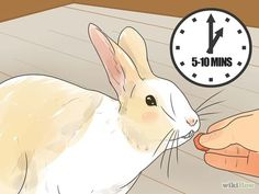 Teach Your Rabbit to Come when Called Step 3 Version 2.jpg