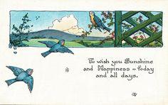 Vintage Bluebirds Postcard