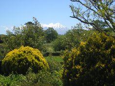 Mount Egmont from Toko, near Stratford in Taranaki.