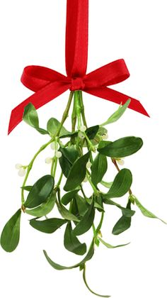 the history of mistletoe Christmas Traditions »