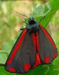 Prachtige vlinders, vlinders horen tot de meest geliefde insecten en zijn er in veel verschillende soorten. De Prachtige vlinders wekken aardige positieve reacties bij de mensen op dit in tegenstelling tot vele andere insecten die men eng of vies vind.