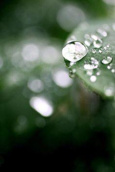 Summer Rain by AR Annahita
