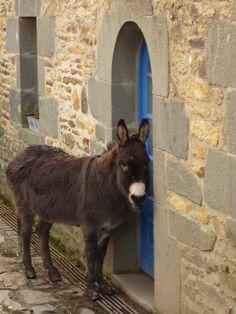 Promenade d'hier dans le centre du village de Logonna-Daoulas une presqu'ile au cœur de la Rade de Brest.    Un âne attend ses maîtres devant la porte de leur maison au pied de l'église classée Saint Monna.    La promenade se fait très facilement depuis nos chambres d'hôtes. On y découvre des endroits authentiques de ce petit de coin caché de Bretagne en Finistère. Sur le sentier littoral, vous découvrirez la Presqu'ile de Crozon, Landévénnec et Lanvéoc.  Domaine de Moulin Mer Le blog