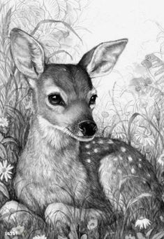 A project for everyone: kleurvitality. – Juliah Dobbs – Animal drawing - New Sites Pencil Drawings Of Animals, Animal Sketches, Deer Drawing, Painting & Drawing, Art Drawings Sketches Simple, Cute Drawings, Deer Sketch, Afrique Art, Deer Art