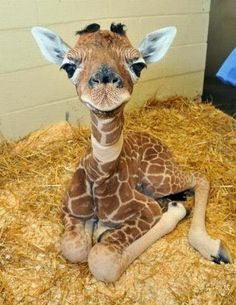 i love all creatures....but I think giraffes are my fav. such grace and beauty! and this thing...omg