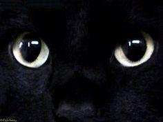Black Cat Wallpaper HD Wallpaper
