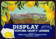 Vintage Original GOLETA SUNKIST LEMONS Citrus Crate Box Label 1930s California