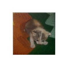 Captivating Kitten Tile!  http://www.zazzle.com/conquestkitty*