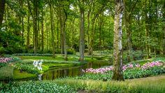At the Keukenhof (The Netherlands) - Photo : Renaud Cornu-Emieux