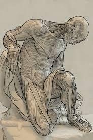 anatomy - Buscar con Google