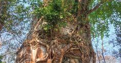 Tree house? https://sphotos-b.xx.fbcdn.net/hphotos-ash3/548590_297460987041113_1689590658_n.jpg | Trees | Pinterest | A house, Hobbit and House