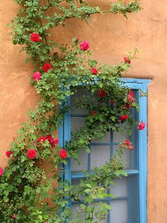 roses on adobe