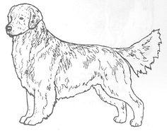 """Dog Rubber Stamp - Golden Retriever-1E (Size: 2-1/4"""" Wide X 1-3/4"""" Tall) DogStampsPlus.com $9.95 + shipping"""