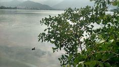 Patinho na lagoa