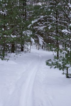 Yankee Springs State Park, Mich. XC ski trails.