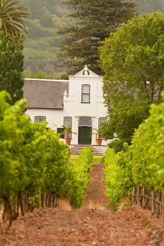 Explore Constantia, the oldest wine region in South Africa and taste world-class wines on a private tour. Famous Wines, Cape Town South Africa, Back In Time, Wine Tasting, Old Things, Tours, Explore, House Styles, World