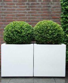 Witte Bloempot Vierkant.69 Beste Afbeeldingen Van Bloempotten Groot In 2017 Grote