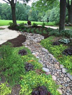 RAIN GARDEN Drainage Grates, Rock Garden Design, Shade Garden Plants, Rain Garden, Woodland Garden, Native Plants, Backyard Landscaping, Stepping Stones, Garden Ideas