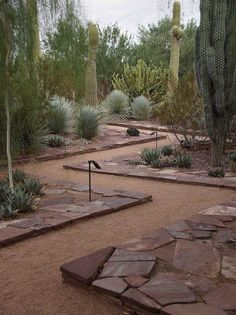 Easy Desert Landscaping Tips That Will Help You Design A Beautiful Yard Landscaping Around House, Landscaping With Rocks, Landscaping Plants, Landscaping Ideas, Dessert Landscaping, Hydrangea Landscaping, Landscaping Edging, Luxury Landscaping, Landscaping Company