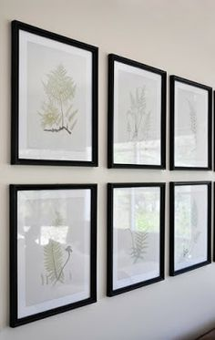 The Painted Hive | Fern Study Prints with Free Printables!