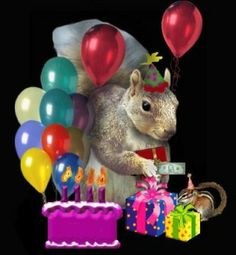 Happy Birthday Squirrel, Cat Birthday Wishes, Happy Birthday Animals, Birthday Greetings, Funny Squirrel Pictures, Funny Animal Photos, Cover Squirrel, Thanks For The Gift, Cute Pictures