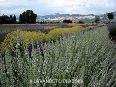 Itinerari Assisi e dintorni